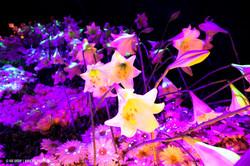 OGE-Flower-Show-Secret-12