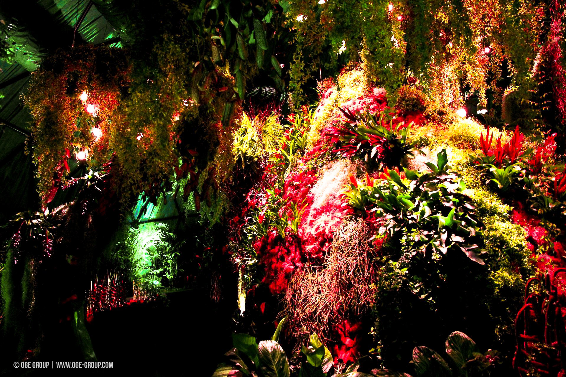 OGE-Flower-Show-Rainforest-3