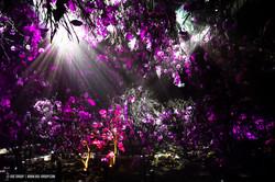 OGE-Flower-Show-upside-2