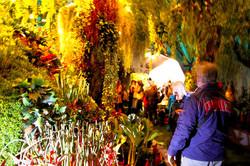 OGE-Flower-Show-Rainforest-15