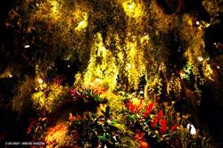 OGE-Flower-Show-Rainforest-14