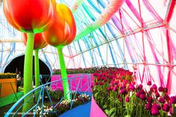OGE-Flower-Show-Rainbow-11