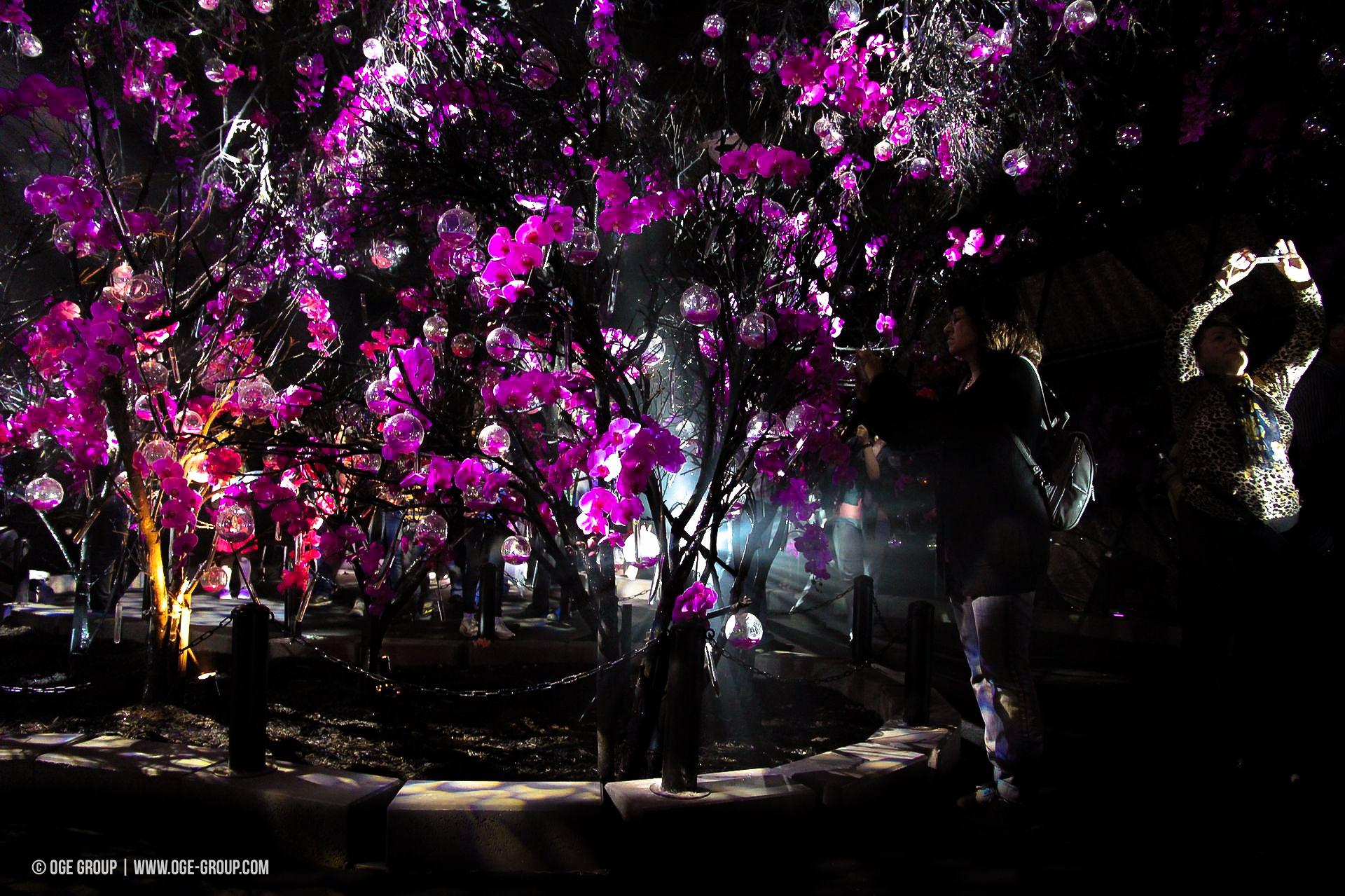 OGE-Flower-Show-upside-17