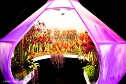 OGE-Flower-Show-Scents-4