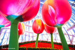 OGE-Flower-Show-Rainbow-15