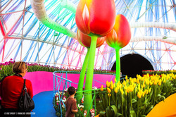OGE-Flower-Show-Rainbow-7