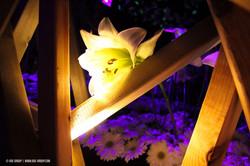 OGE-Flower-Show-Secret-9