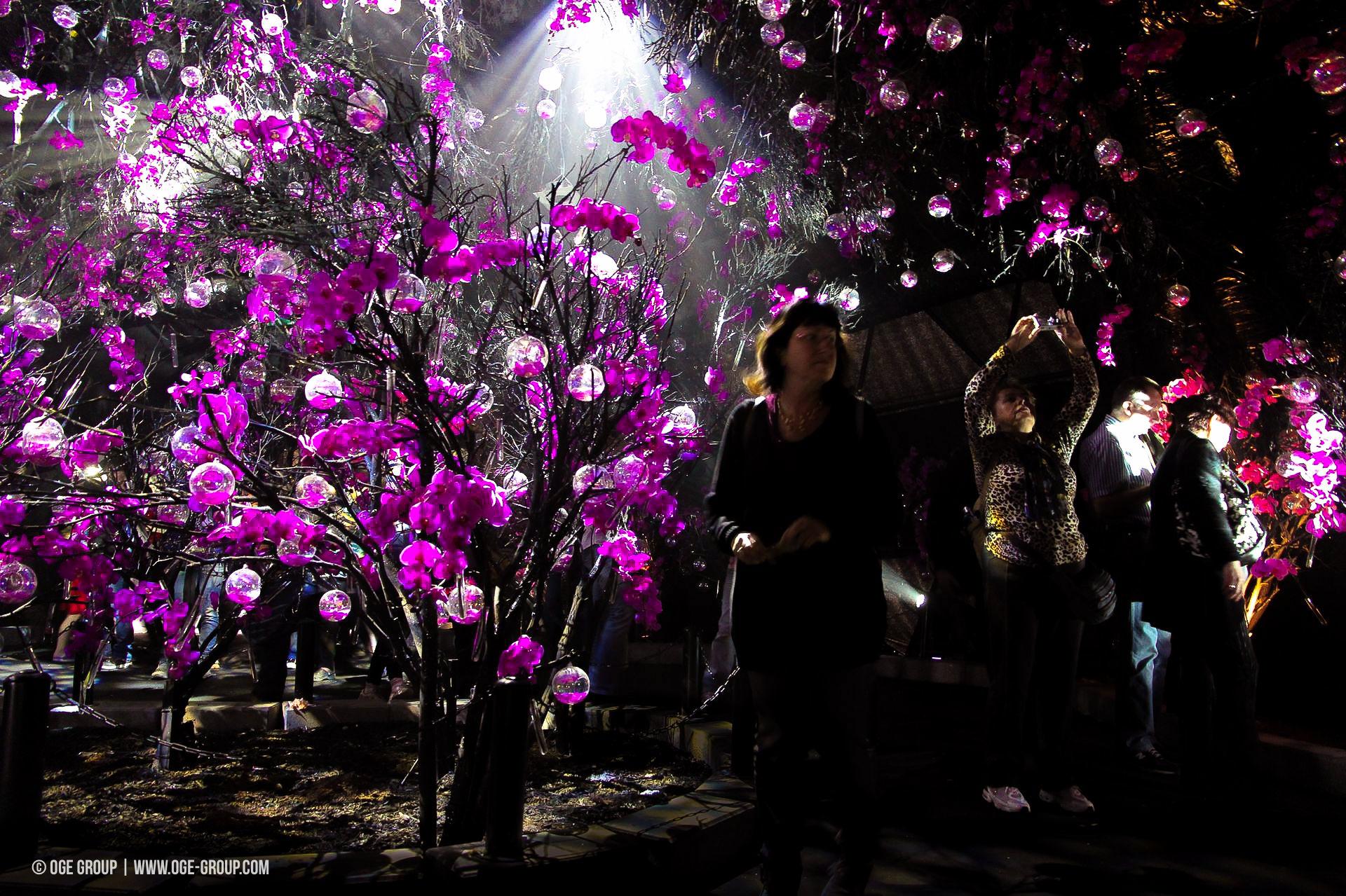 OGE-Flower-Show-upside-18