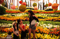 OGE-Flower-Show-Fields-9