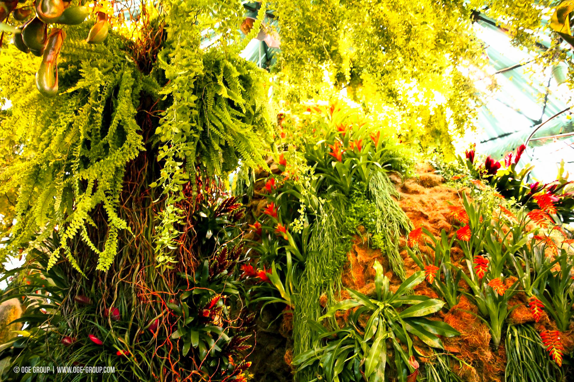 OGE-Flower-Show-Rainforest-16