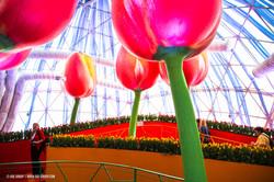 OGE-Flower-Show-Rainbow-16