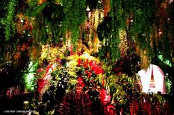 OGE-Flower-Show-Rainforest-2