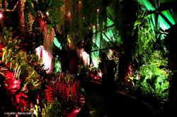 OGE-Flower-Show-Rainforest-4