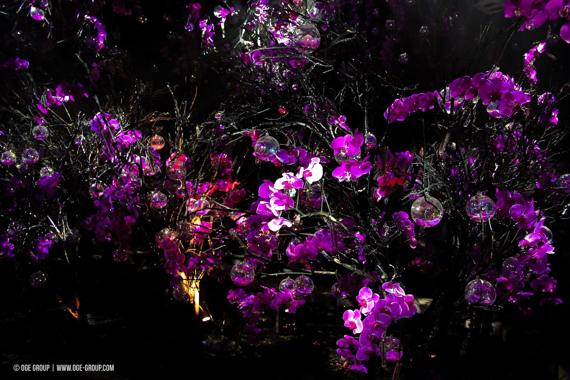 OGE-Flower-Show-upside-16