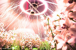 OGE-Flower-Show-Scents-20