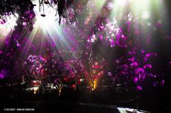 OGE-Flower-Show-upside-20