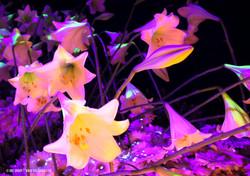 OGE-Flower-Show-Secret-13