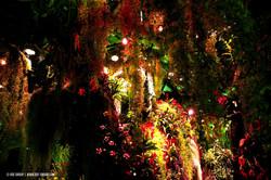 OGE-Flower-Show-Rainforest-9