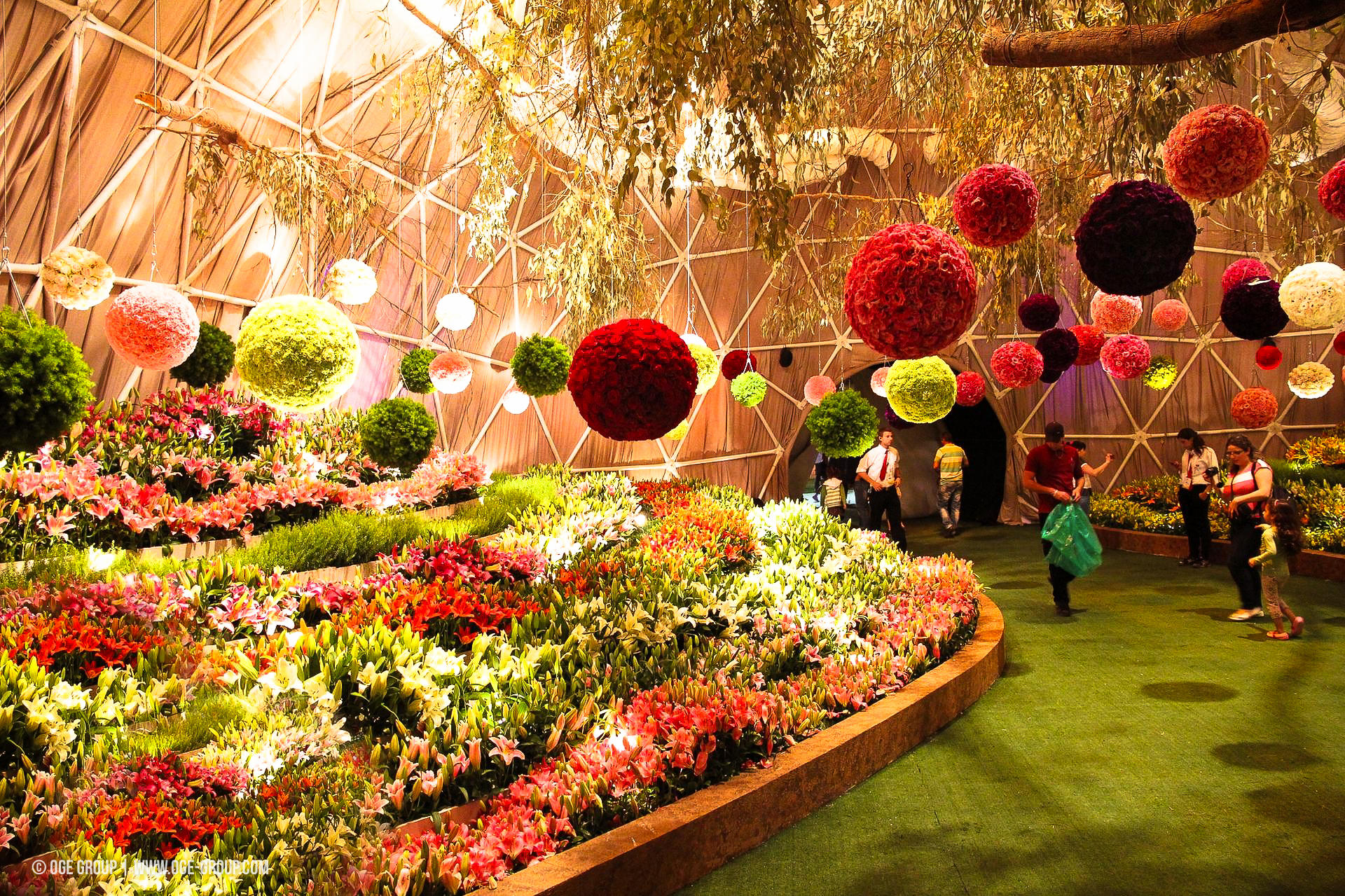 OGE-Flower-Show-Fields-5