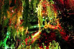 OGE-Flower-Show-Rainforest-5