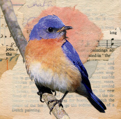Bluebird with Pink Halo