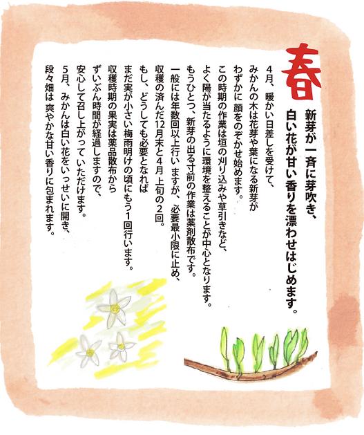 中島農園みかん春