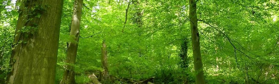 Keeds Wood, Long Ashton, North Somerset