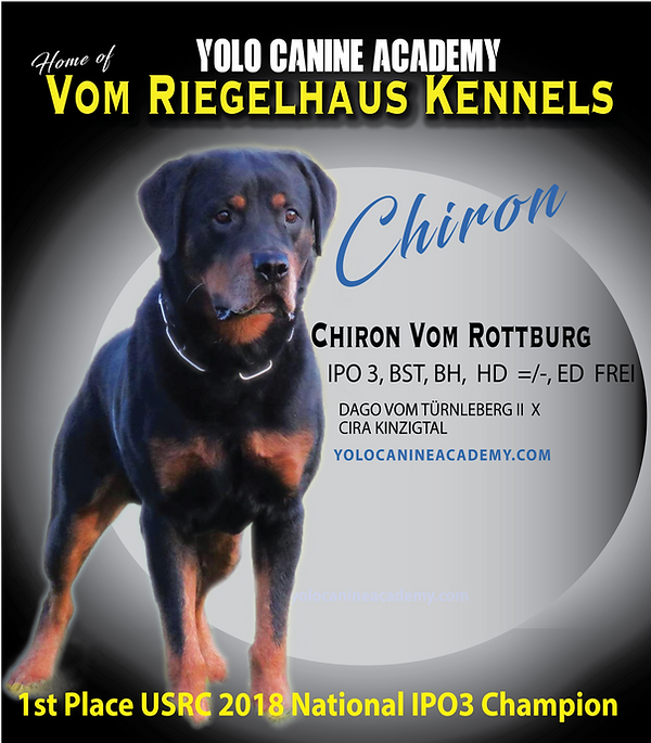 Chiron Rottweiler-09.png