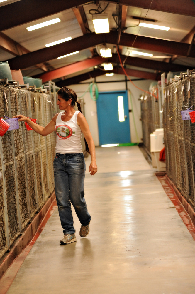 Clean and sanitary kennels