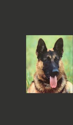 Shepherd Main-05