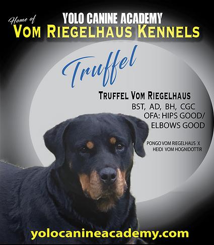 Truffel Rottweiler-08.png