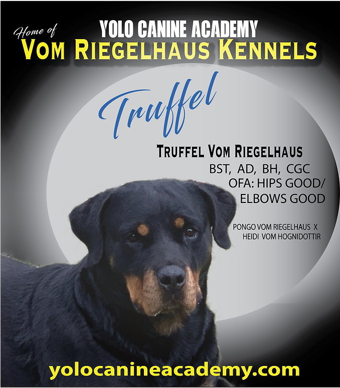 Truffel-08.png