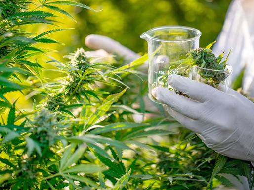 Scientists need more proof whether cannabis can treat mental illness