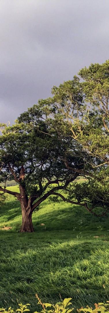 13trees-minDEC-Original.JPG
