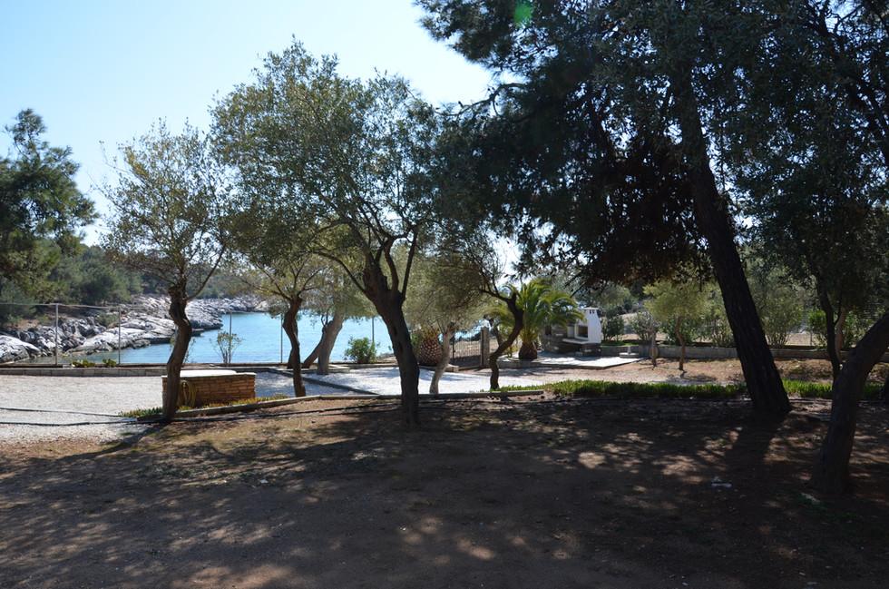 Isidora garden