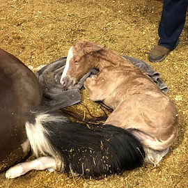 mulder foal crop website.jpg
