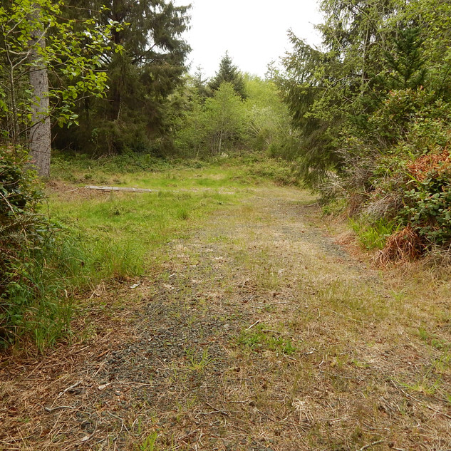 Approach to Storage Shed.jpg