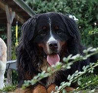 Klaxx. | Gustav | Therapiehund | Lernunterstützung & Tiertherapie