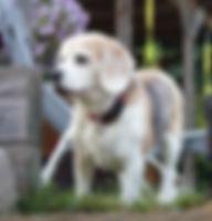 Klaxx. | Dolittle | Therapiehund | Lernunterstützung & Tiertherapie