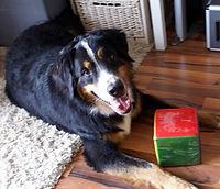 Klaxx. | Bruno | Therapiehund | Lernunterstützung & Tiertherapie