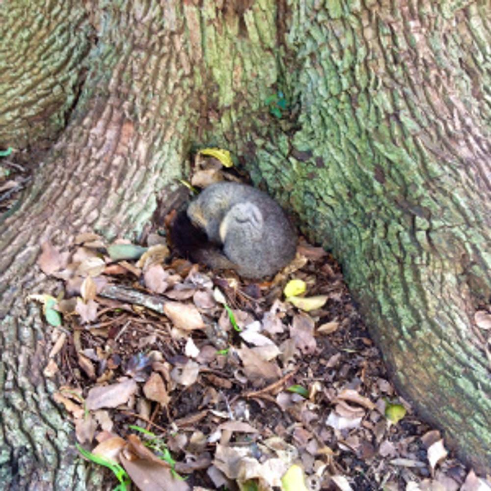 Possum on ground!
