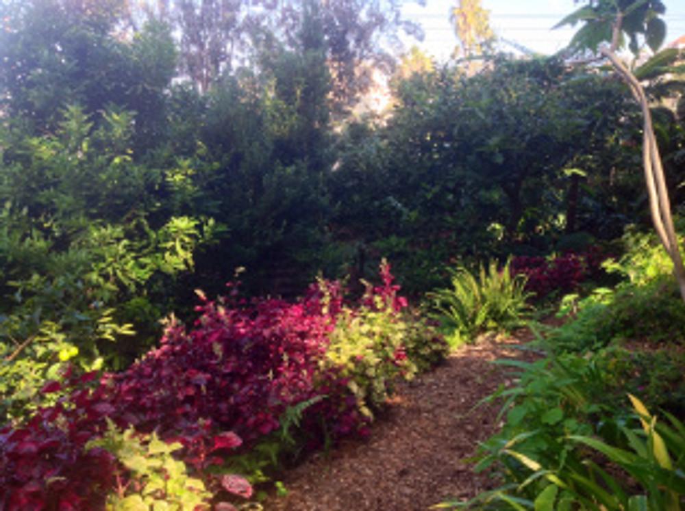 Wendy's secret garden lavender bay