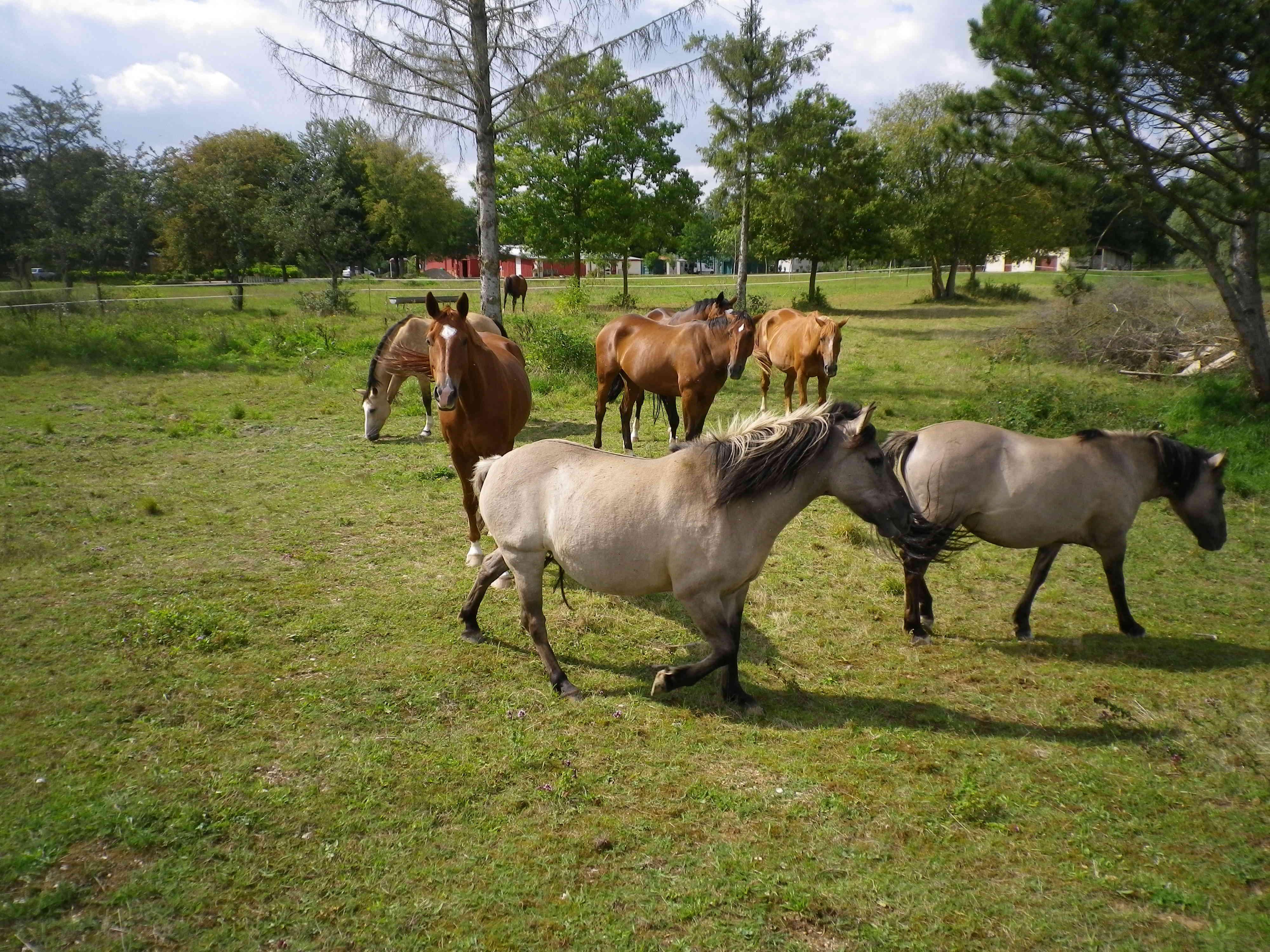 camping-lac-du-der-chevaux