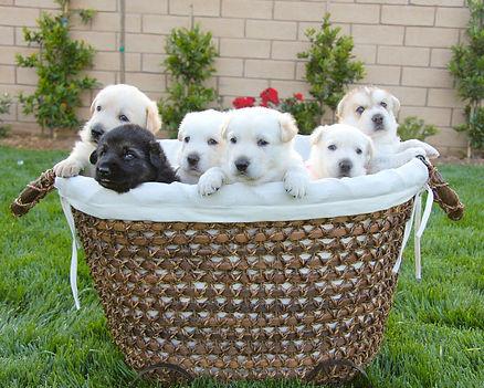 Jazzy Puppies 3.5 2 046a.jpg
