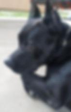 Panther Handsome Website.jpg