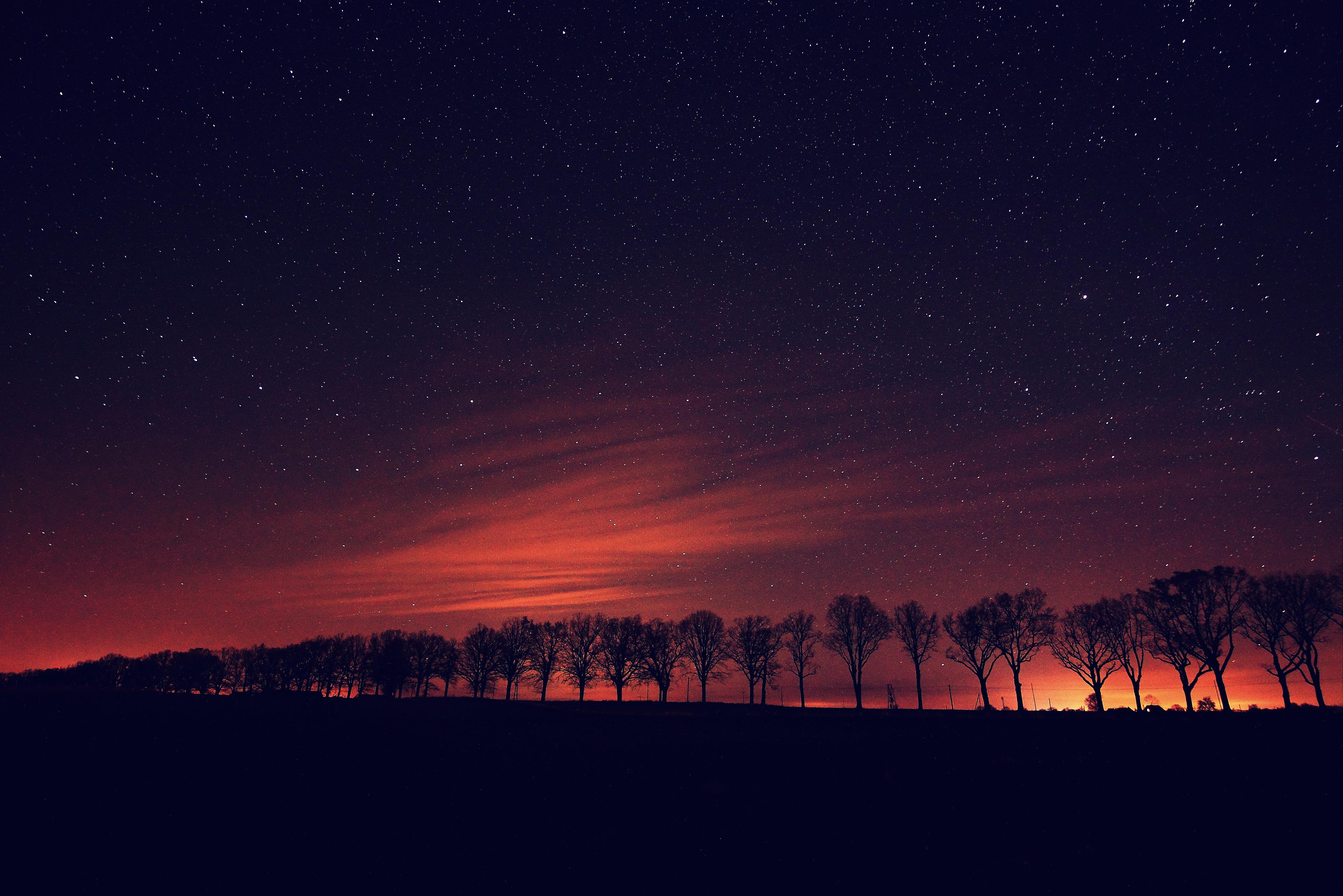 Aleja dębowa nocą
