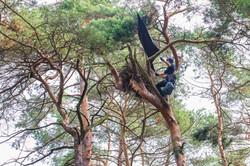 Akcja obrączkowania bocianów czarnych