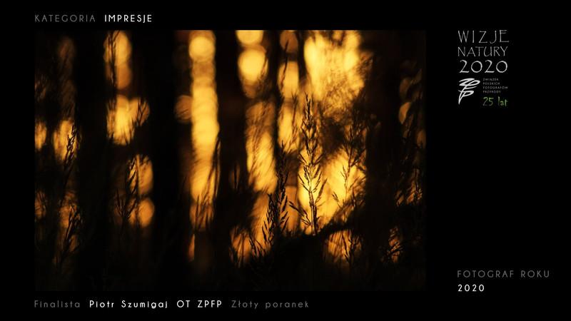 XVI edycja Międzynarodowego Festiwalu Fotografii Przyrodniczej Wizje Natury 2020