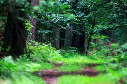 W leśnych ostępach