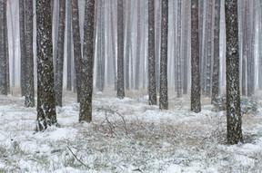 Zima w Borach Tucholskich